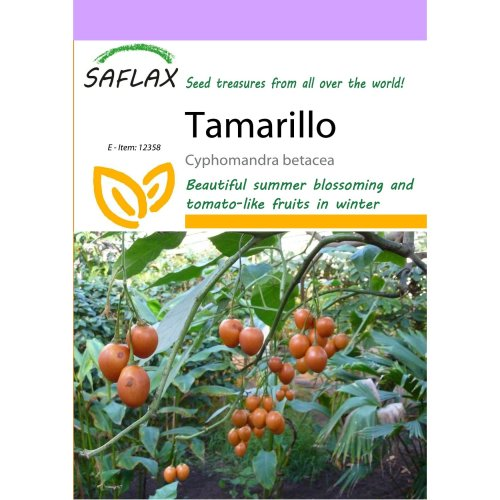 Saflax  - Tamarillo - Cyphomandra Betacea - 50 Seeds
