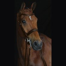 Collegiate Mono Crown Padded Raised Weymouth Bridle: Brown: Warmblood