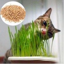 90g Pure Natural Grown Sweet Oat Grass Seeds