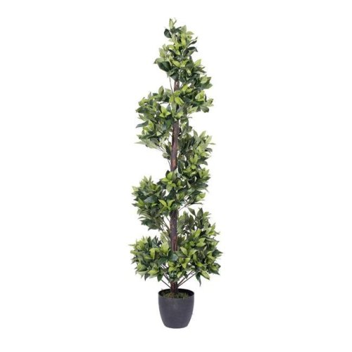 Spiral Bay Everyday Tree in Pot - 5 ft.