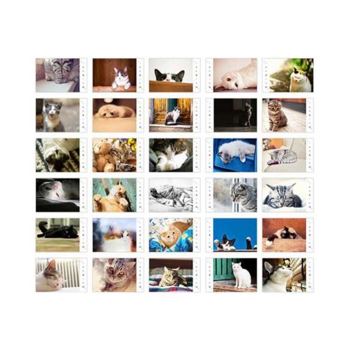 White Cardboard Pack of 30 Postcards Lovely Cat Theme Post Card