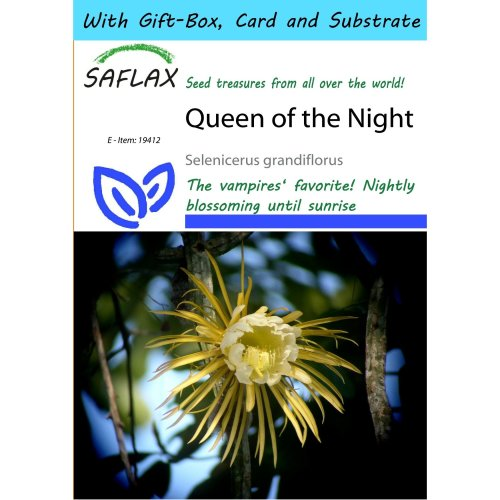 Saflax Gift Set - Queen of the Night - Selenicerus Grandiflorus - 40 Seeds - with Gift Box, Card, Label and Potting Substrate