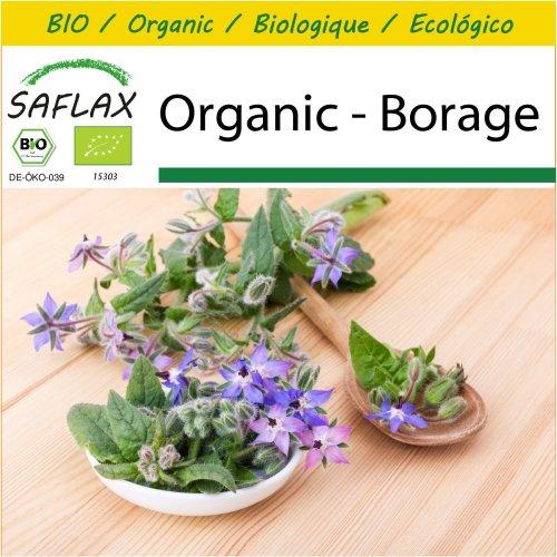 SAFLAX Potting Set - Organic - Borage - 40 certified organic seeds  - Borago