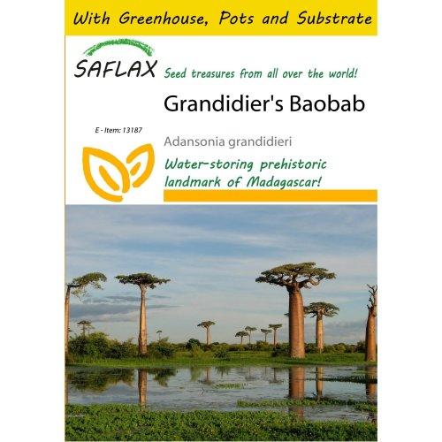 Saflax Potting Set - Grandidier's Baobab - Adansonia Grandidieri - 2 Seeds - with Mini Greenhouse, Potting Substrate and 2 Pots