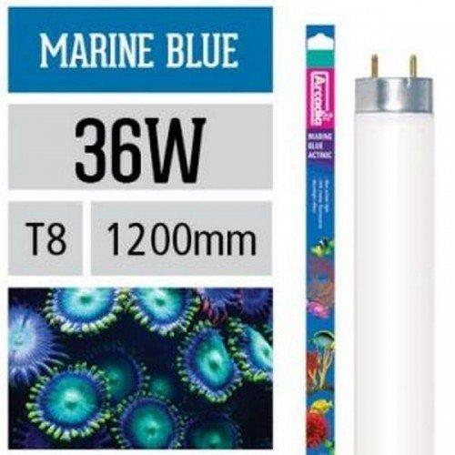 Arcadia Marine Blue Lamp Actinic T8