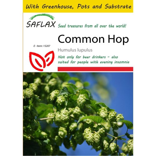 Saflax Potting Set - Common Hop - Humulus Lupulus - 50 Seeds - with Mini Greenhouse, Potting Substrate and 2 Pots