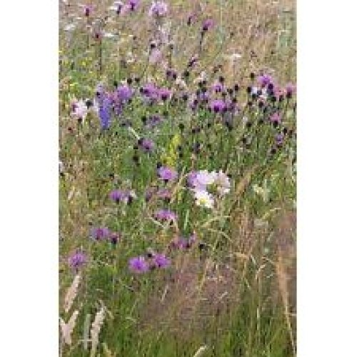 Wild Flower - Meadow Mixture - Bees and Butterflies - 20g